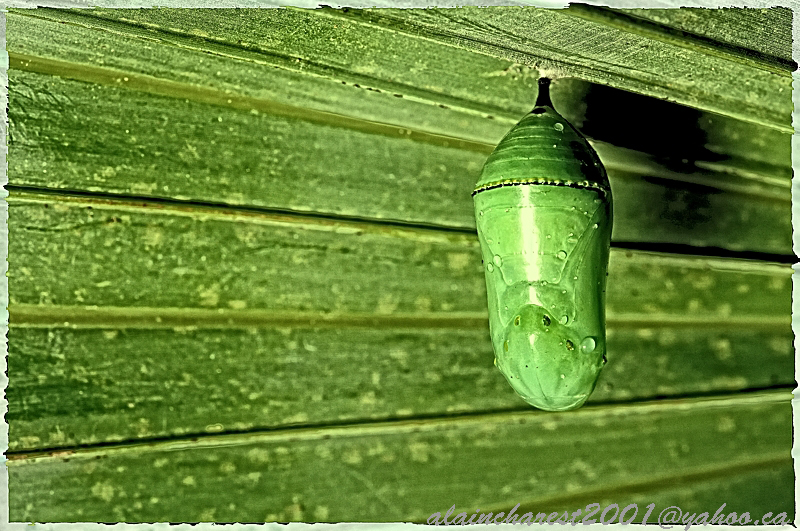 Green cocoon