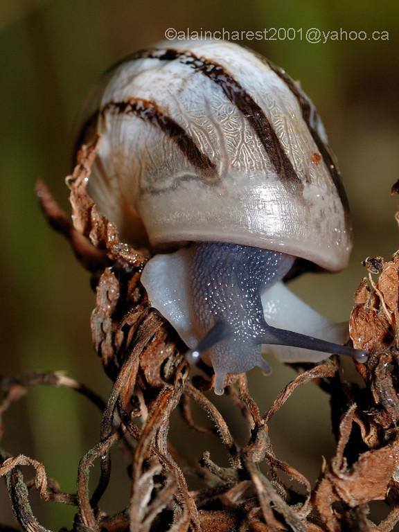 Snail on died vegetation