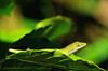 Living Green on green leaf