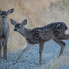 Twin Fawns Giving You The Suspicious Eye