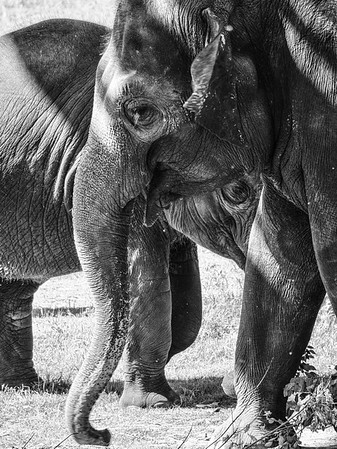 OKC_Zoo_07Jun2015_0007