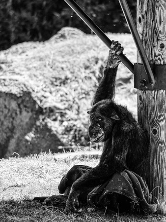 OKC_Zoo_07Jun2015_0041