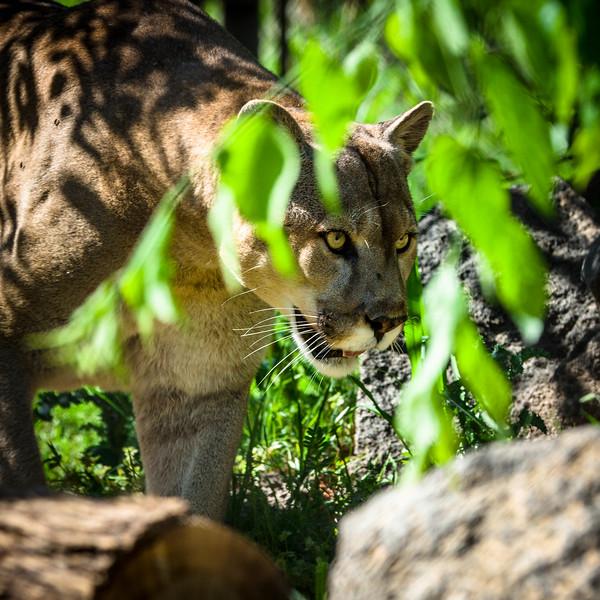 OKC_Zoo_25Apr2015_0034
