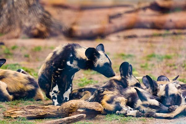 OKC_Zoo_25Mar2017_0013