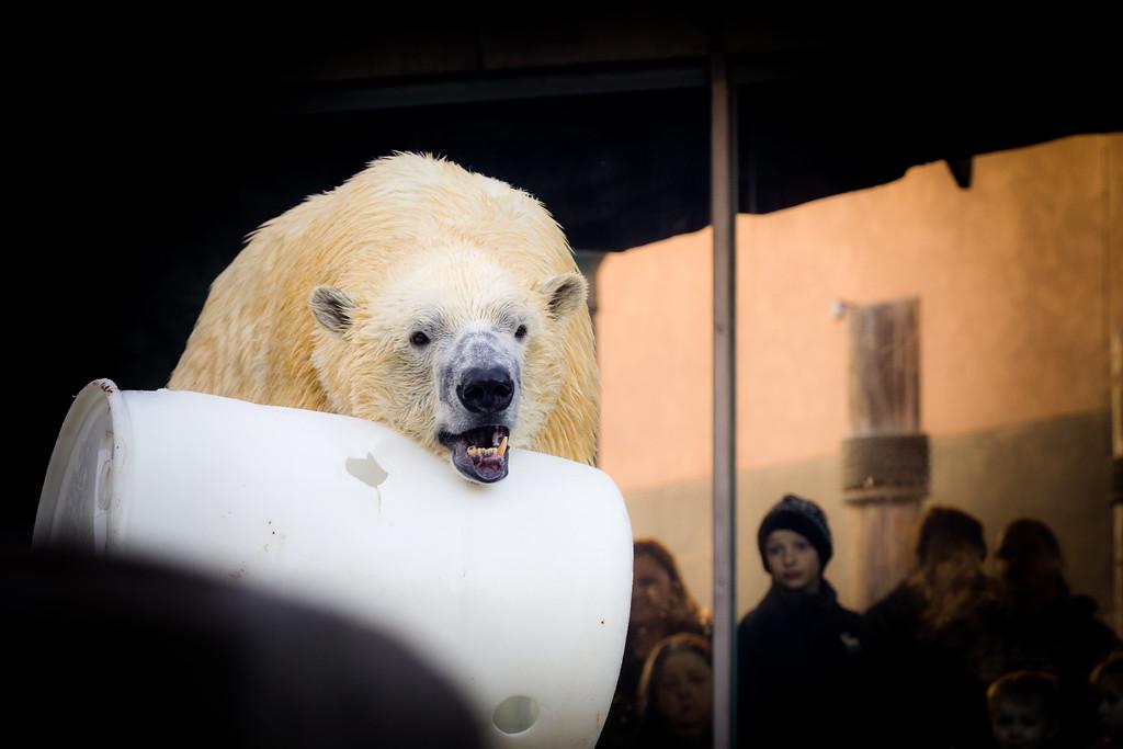 IMAGE: https://photos.smugmug.com/Animals--Wildlife/St-Louis-Zoo-16Dec2017/i-nsS4Hd6/1/ac723264/XL/StLouisZoo_16Dec2017_0033-XL.jpg