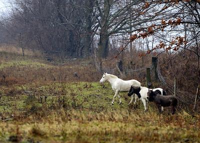 Horses - Borodino NY