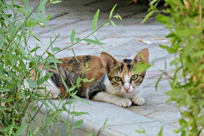 Mushrif Park 077