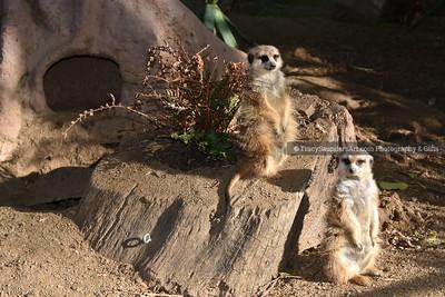 Animals Other 081519TracySaundersArt Yes (20)