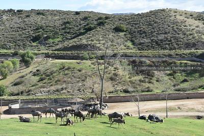Animals Other 081519TracySaundersArt Yes (13)