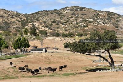 Animals Other 081519TracySaundersArt Yes (26)
