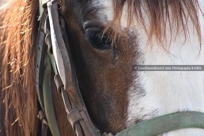Animals Other 081519TracySaundersArt Yes (11)