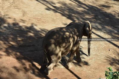 Animals Other 081519TracySaundersArt Yes (15)