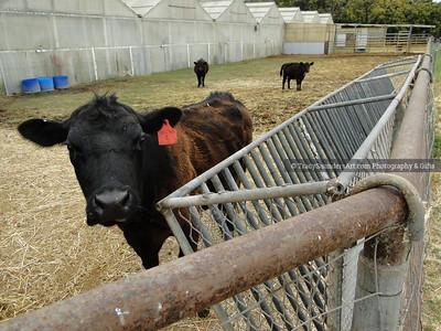Animals Other 081519TracySaundersArt Yes (88)
