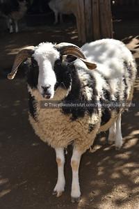 Animals Other 081519TracySaundersArt Yes (69)