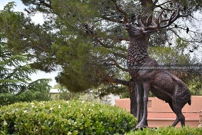 Animals Other 081519TracySaundersArt Yes (12)