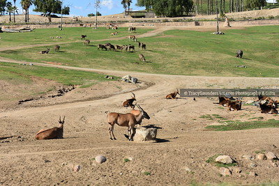 Animals Other 081519TracySaundersArt Yes (16)