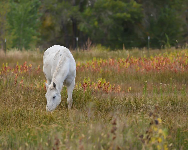 Horse in Lone Pine