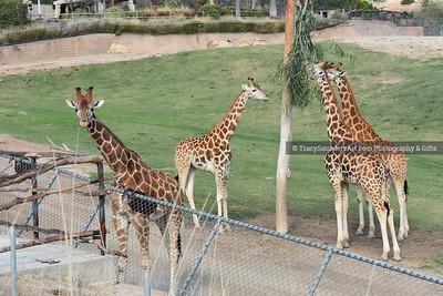 Animals Other 081519TracySaundersArt Yes (65)