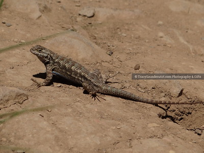 Animals Other 081519TracySaundersArt Yes (84)