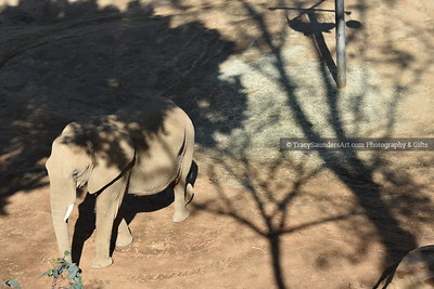 Animals Other 081519TracySaundersArt Yes (21)