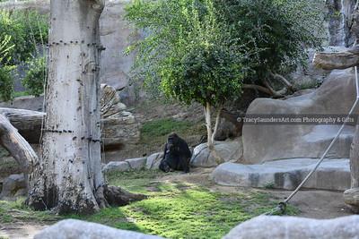 Animals Other 081519TracySaundersArt Yes (28)