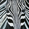 """Zebra"" (oil on canvas) by Jennifer Erdman"