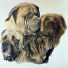 """My Guys"" (watercolor) by Marsha Mills"