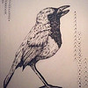 """""""Japanese Wagtail """" (pen) by Ashley  Peters"""