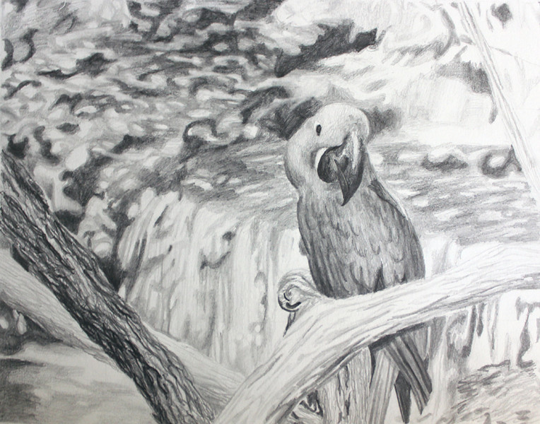 """Perched"" (graphite) by Stephanie Bailly"