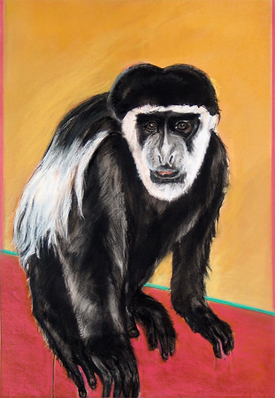 """Patrick, the Colobus"" (ink, charcoal, pastel) by Judith Brandon"