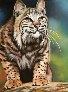 """Bobcat: Got Eyes on You"" (pastel on Ampersand pastelbord) by Patsy Lindamood"