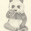 """Panda"" (pencil) by Jacci Roesener"