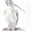 """Pelican"" (watercolour on paper) by Sofiya Shukhova"