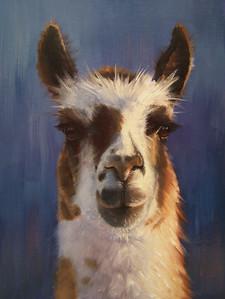 """Llama"" (oil on canvas) by Rose Ann Bernatovich"