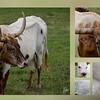 """""""Longhorns"""" (photomontage) by Karen Rispin"""