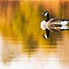 """""""Sitting Duck"""" (digital painting) by Jamie Homan"""