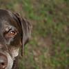 """Pup"" (photography) by Megan Adams"