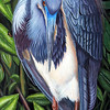 """Tri-Color Heron in Breeding Colors"" (acrylic on board) by Sheryl Hughes"