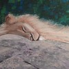 """The lion sleeps today"" (pastel) by Marianne Holtermann"