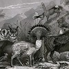 """""""Bestiary VII"""" (hand cut collage) by Axelle Kieffer"""