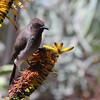 """Morocco - a bird in Jardin Majorelle"" (PhotoArt) by Thomas Henriksson"