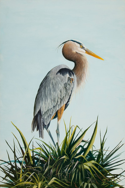 """""""Great Blue Heron"""" (oil on canvas) by Tricia Eisen"""