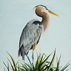 """Great Blue Heron"" (oil on canvas) by Tricia Eisen"