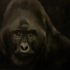 """Gorilla"" (oil on canvas) by Amanda Grafe"