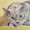 """Puss Off"" (watercolor) by Sonja Jones"