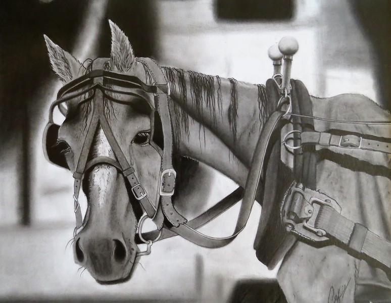 """""""To the Bone"""" (pencil) by Colleen Freshour"""