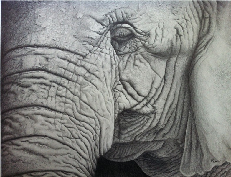 """Elephant"" (graphite pencil) by David Pope"