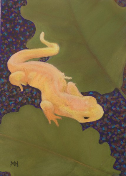 """""""Eastern newt, red eft stage"""" (pastel) by Marianne Holtermann"""