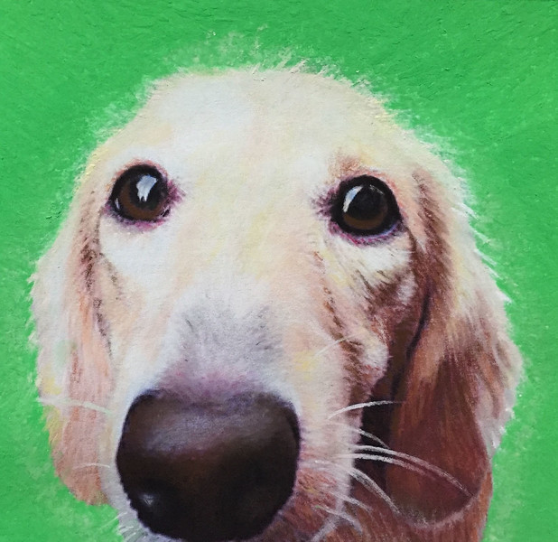 """""""Goldie"""" (pastels) by Maywah Hill"""