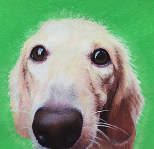 """Goldie"" (pastels) by Maywah Hill"